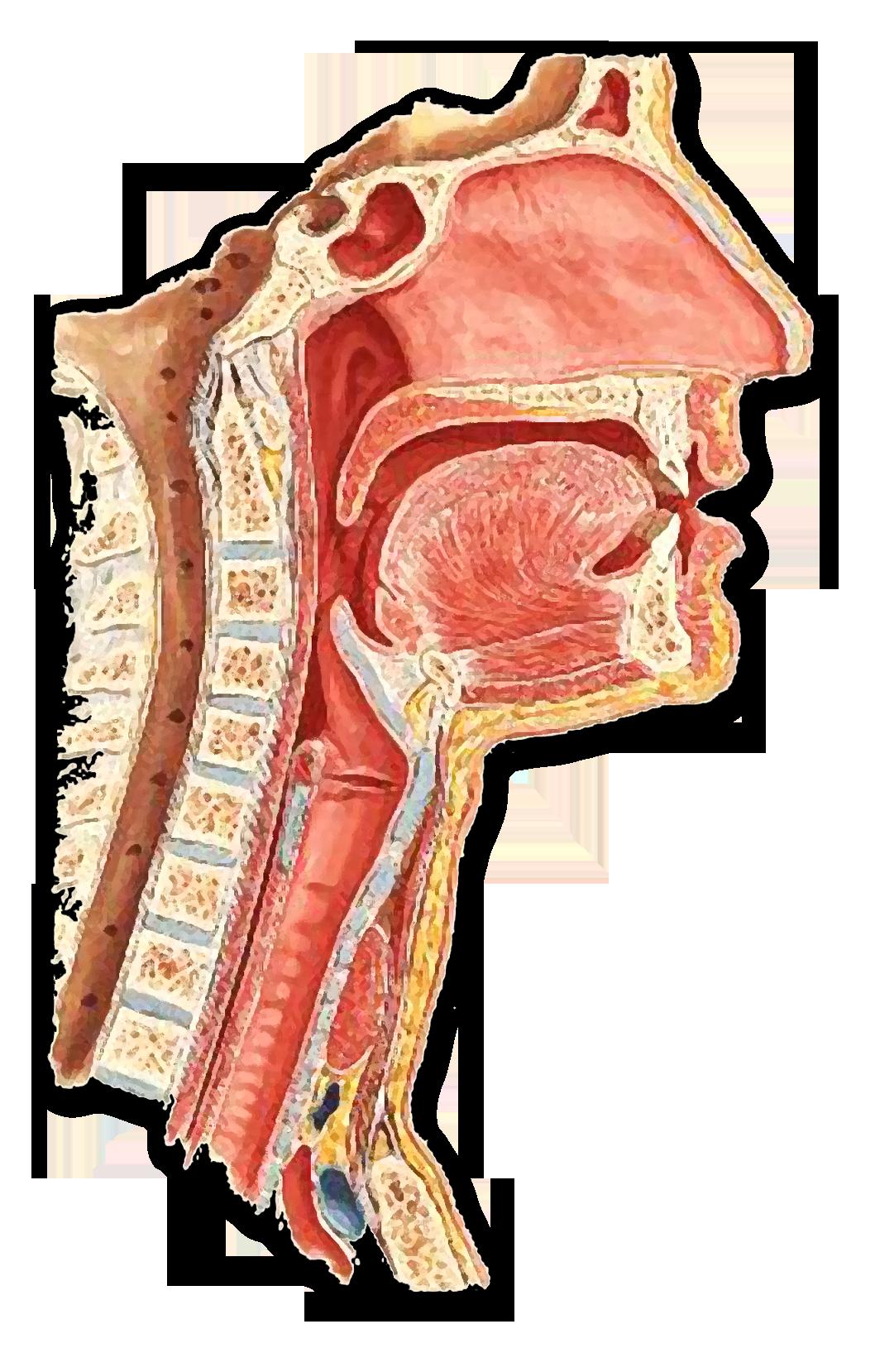 Manejo clínico e diagnóstico diferencial das doenças infecciosas granulomatosas das vias aéreas e digestivas superiores – Fonoaudiólogos e acadêmicos de Fonoaudiologia - 2º Oferta
