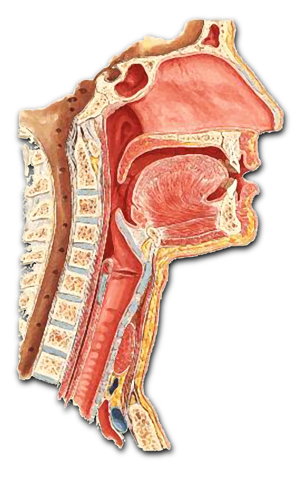 Manejo clínico e diagnóstico diferencial das doenças infecciosas granulomatosas das vias aéreas e digestivas superiores – Multiprofissional - 2º Oferta
