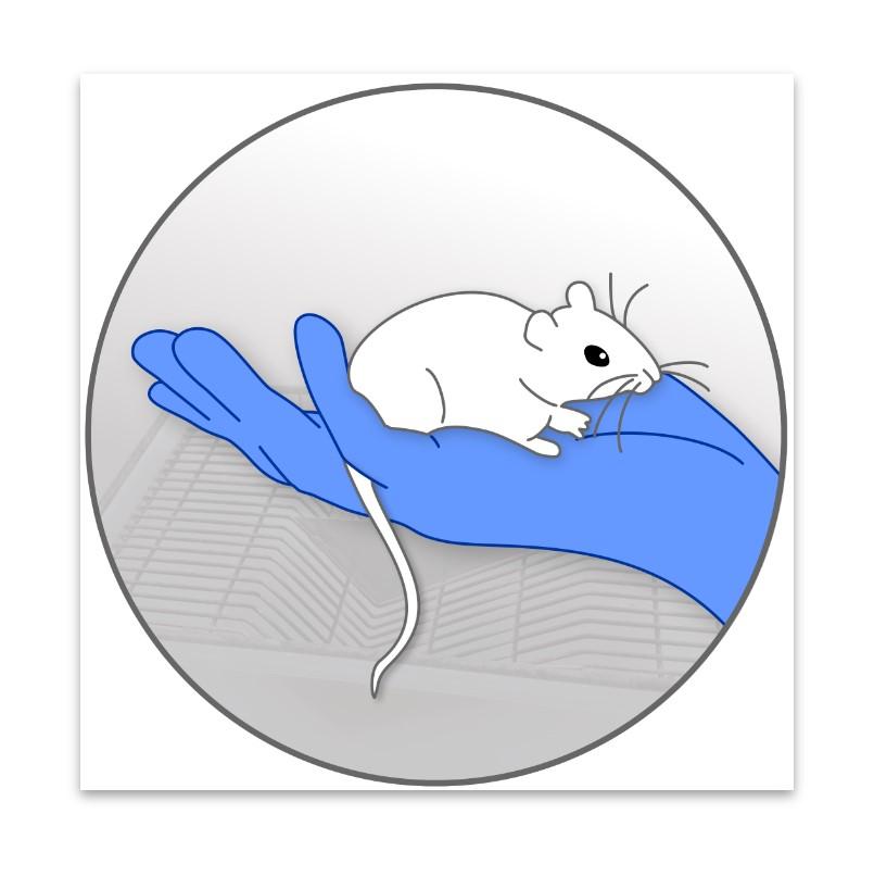 Manejo e Ciências de Animais de Laboratório